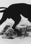 Josef Koudelka : la fabrique d'exils