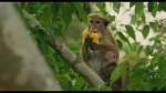 Au Royaume des singes - Bande Annonce - VF
