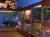 Museum d'Histoire naturelle de Troyes