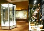 Muséum d'Histoire naturelle de Perpignan