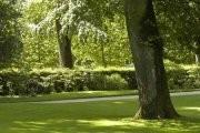 Jardin des plantes de Poitiers