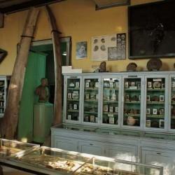 Salle Paléontologie