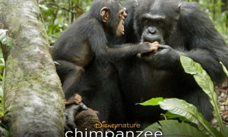 Chimpanzés - Bande annonce VF