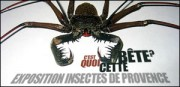 EXPOSITION INSECTES DE PROVENCE