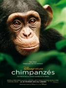 Chimpanzs